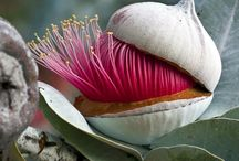 Australian Native Gardens / by Margaret Miller