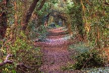 Enchanted Forest.... / Into the Woods....mysterious, magical, enchanted... / by Maria Hurcomb