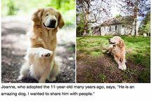 Inspirational Pet Stories