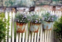 Plant & Garden Inspiration / hope to be able to create these beautiful things. / by Naturally Made { Emily Habel }
