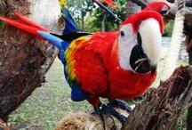 Aves de México / Ejemplares de aves majestuosas de México