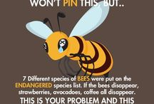for bees