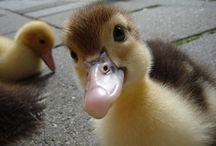 komik tatlı hayvanlar