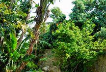 Mediterranean Style Gardens