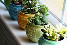 Plants / Plants display ideas