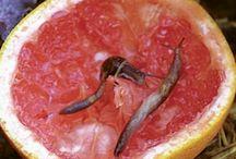 Garden Pests & Problems / Vegetable Gardening