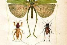 жуки бабочки