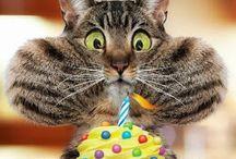 Geburtstag tiere lustig