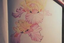 pencil colouring