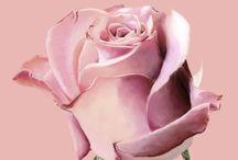 Flower  -  photo