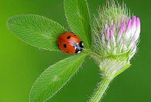 แมลงเต่าทอง..ผีเสื้อกับดอกไม้