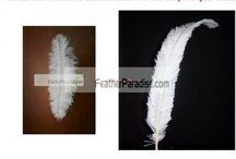 Feather Boas Arts / by Feather Paradise
