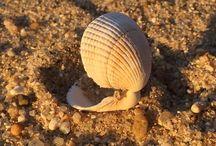 Conchas / Conhas, mar, praia