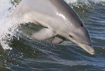 El mar nadando delfín