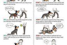 Om hundar
