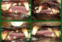 Emmi-pet fogápolás / Fogkő eltávolítása -altatàs nélkül!
