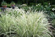 Rośliny - białozielone