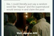 Supernatural has a GIF for everything / Supernatural has a GIF for everything and everything happens on Supernatural