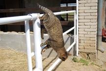 Others animals / Aimals, animals, animals.... Prostě zvířata. :)