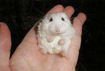 Animales pequeños