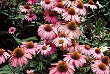 Garden / by Lisa