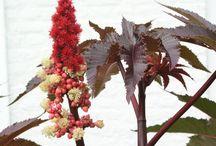 tropisch ogende eenjarigen/kuipplanten