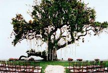 woodland/forrest wedding