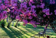Flores/lugares