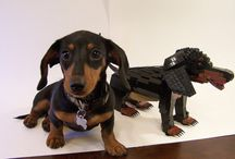 DOXIE LOVE !!! / All things doxie ! / by barbara battista