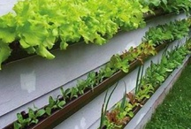 Gardening & Outdoor Projects