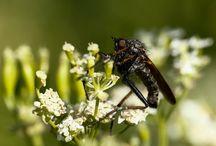 Insecten / Fotograferen van insecten