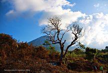 Mt Rinjani Trip