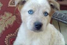 Puppy and cute things I ♥ / by Maribel Mendoza