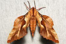 owady