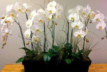 orquideas decorar
