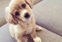 Puppies ❤