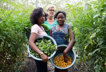 """Community Garden / Why are women doing most of the work in urban gardens?  Some may beg to differ.  """"Mother Nature's Daughters-"""" NY Times."""