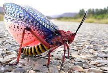 Bugses