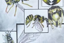 insects study