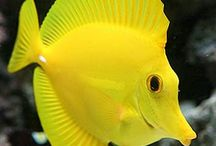 Ryby tropikalne