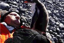 I #pinguini ci amano ... e noi non lo sappiamo!!! / The #Penguins love us!!!