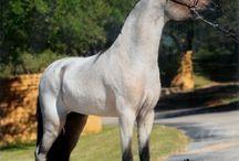 Arab lovak