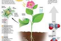 Jorja science project / Photosynthesis