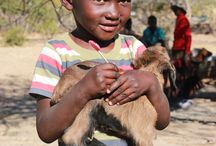 What AFCAids does / @AFCAids works in the Democratic Republic of Congo, Kenya, Zimbabwe, and Uganda.  We have livestock, garden, medicine, medical supply, school, and training programs - all to help children affected and/or infected by AIDS.