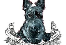 SCOTTIES, AUSSIE DOODLES & OTHER LOVEABLES / SO BEAUTIFUL!  IN LOVING MEMORY OF MY PRECIOUS SCOTTY - SCOOBY - 24.11.91 TO 11.12.07. STILL MISSED, NEVER FORGOTTEN! XO  / by Deb Twynam
