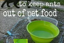 Pet Hacks / Finding hacks for children and their pets.