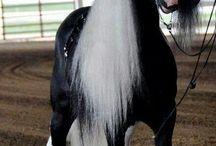 cai shire