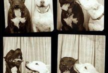 Love Dogs / by Kayla Tucker