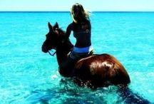 Pferde♡