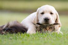 Piccoli amici / Animali